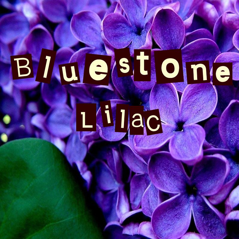 Bluestone Lilac