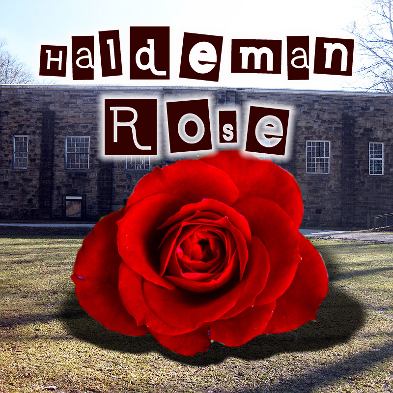 Haldeman Rose
