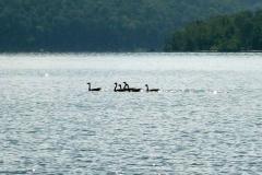 ducks-on-cave-run-lake