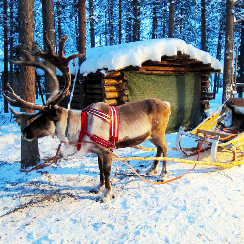 Reindeer Retreat