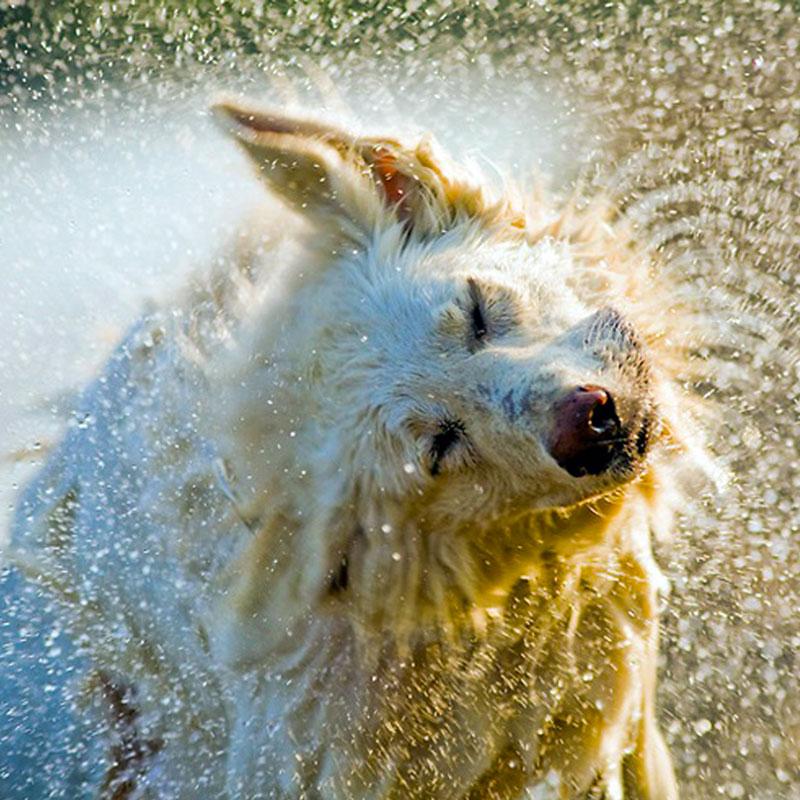 Soggy Dog Pet Bathin Bar